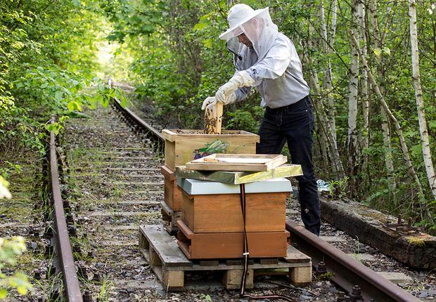 """""""Berliner Hobby-Imker"""" Karsten Schischke mit seinen Bienen auf einem stillgelegten Gleis"""