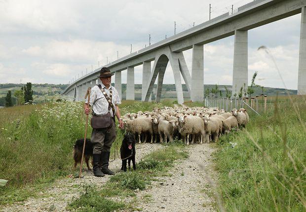 Schäfer beweidet mit seinen 630 Schafen im Auftrag der DB die Orchideenwiesen an der Unstrut-Talbrücke